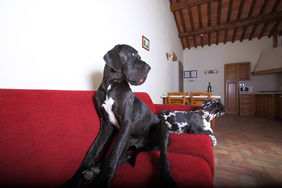PETS ALLOWED! APPROVED BY GREAT DANES!