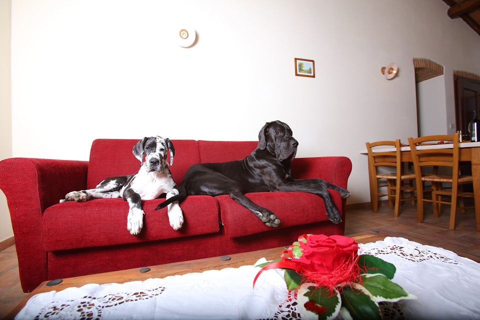 RESIDENCE VOLTONCINO PET FRIENDLY