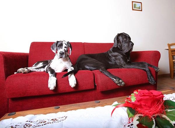 CASALE VOLTONCINO PET FRIENDLY